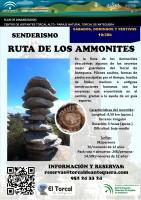 Ruta Ammonites